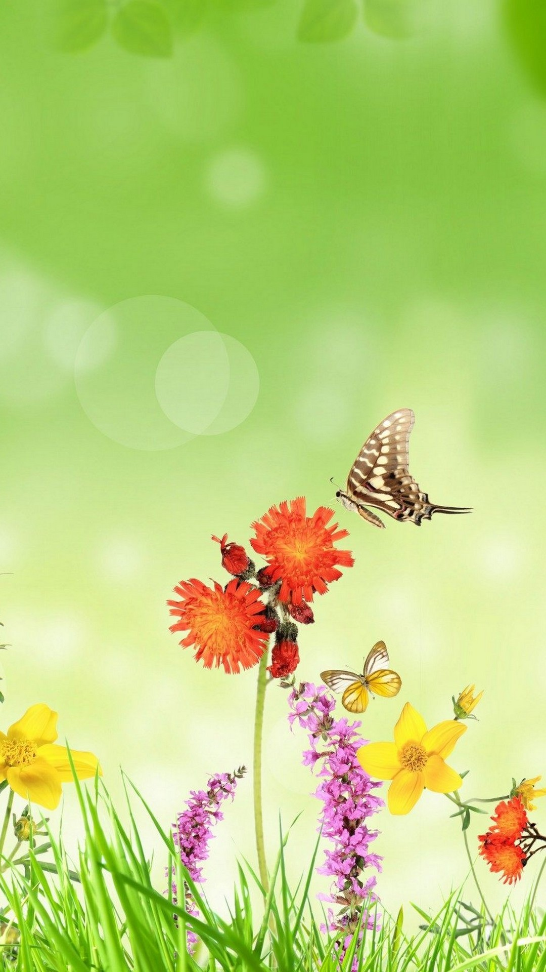 Android Wallpaper Cute Butterfly