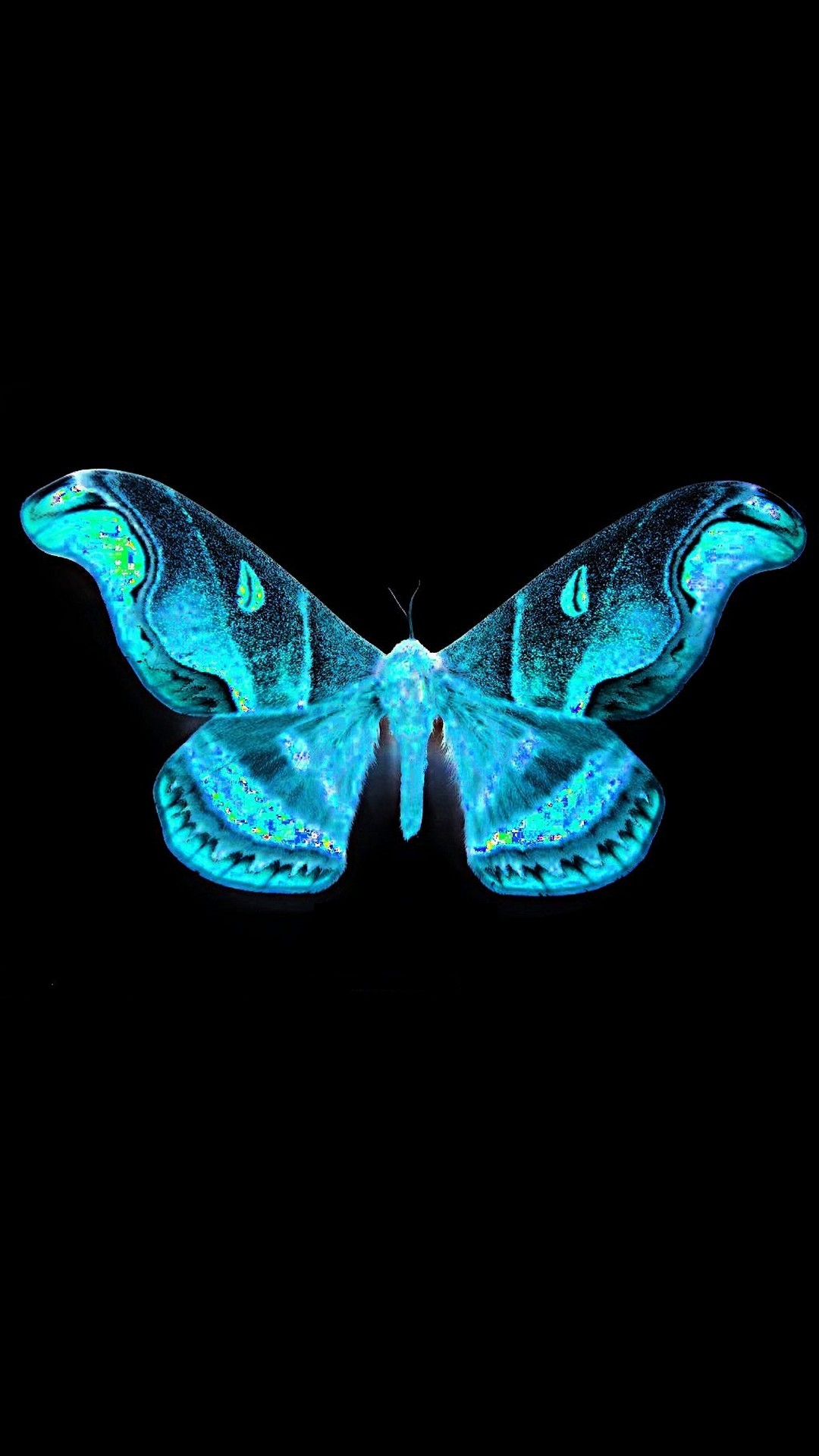 Blue Butterfly With Black Background