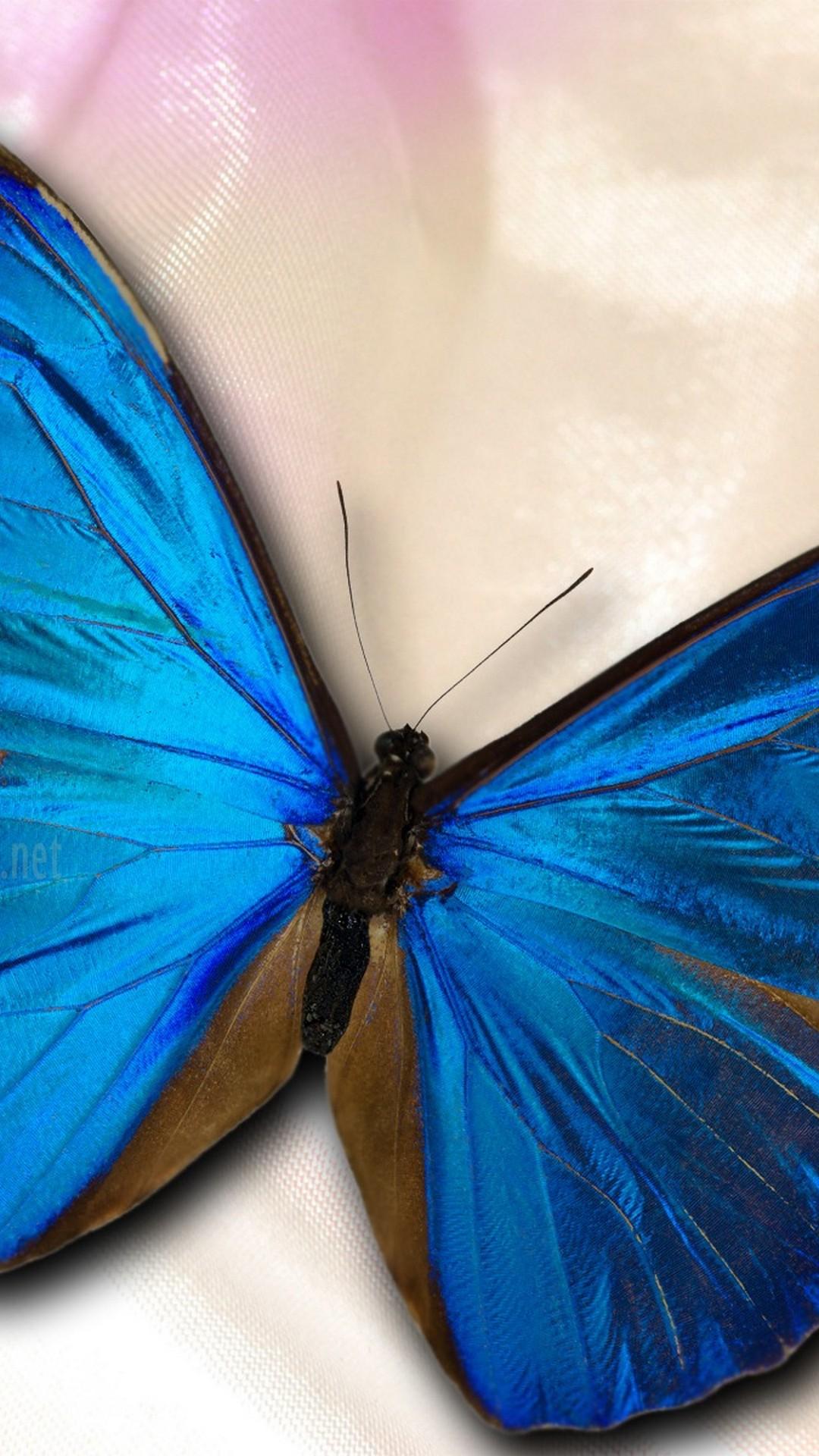 Silver Blue Butterfly Backgrounds Wallpaper