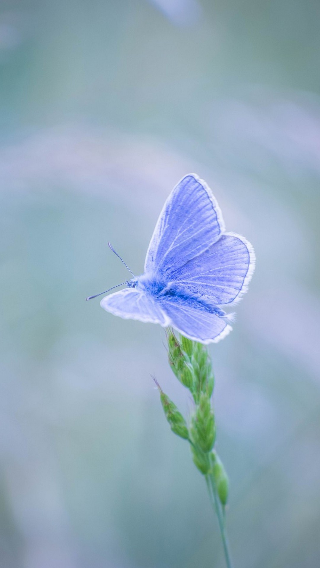 White & Blue Butterfly