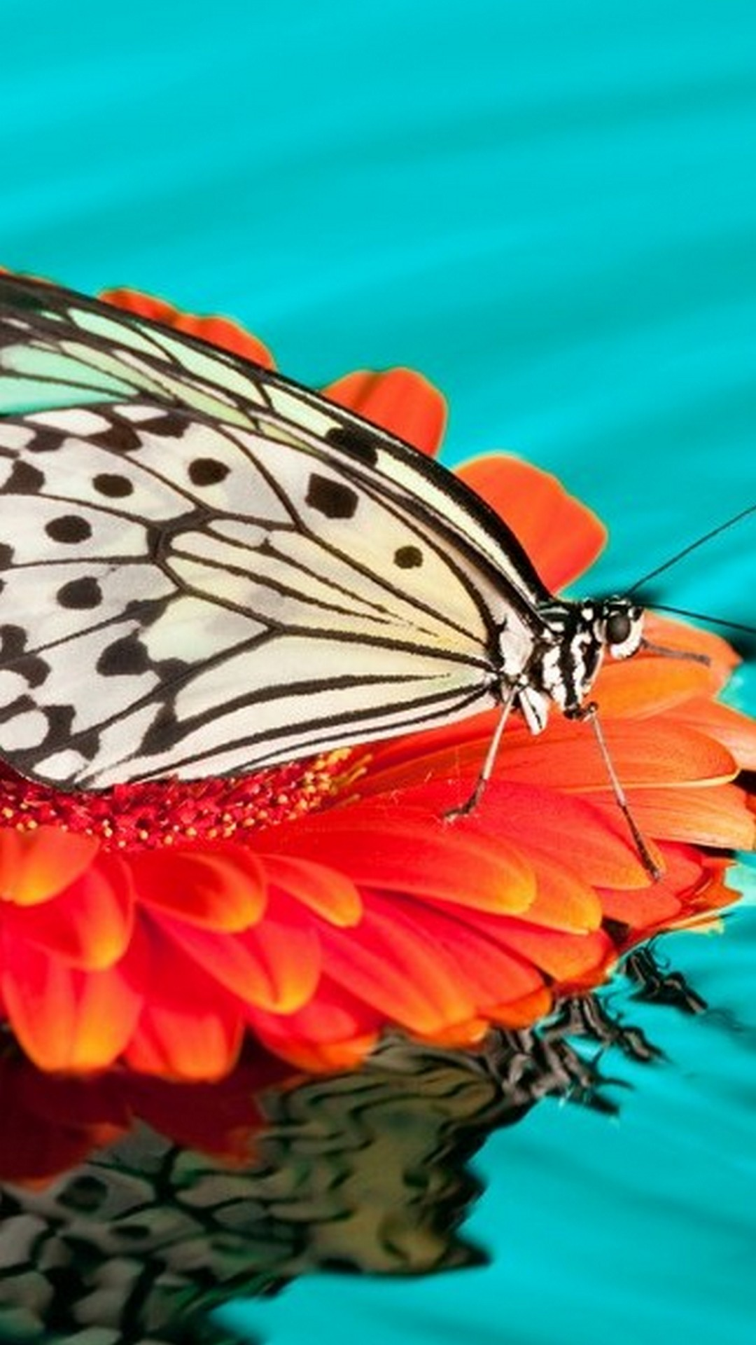 Butterfly Backgrounds For Android