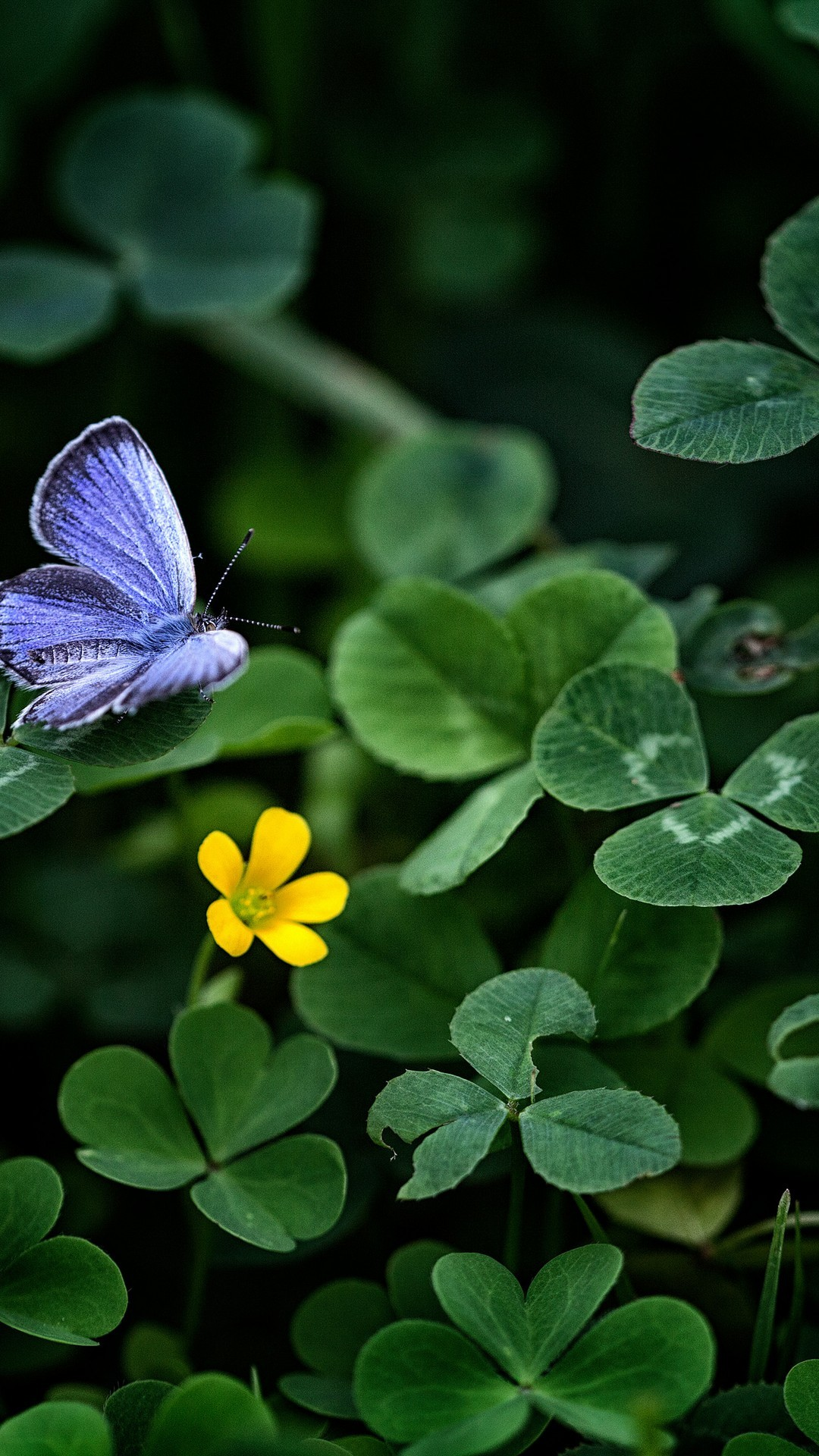 Butterfly With Nature & FLowers