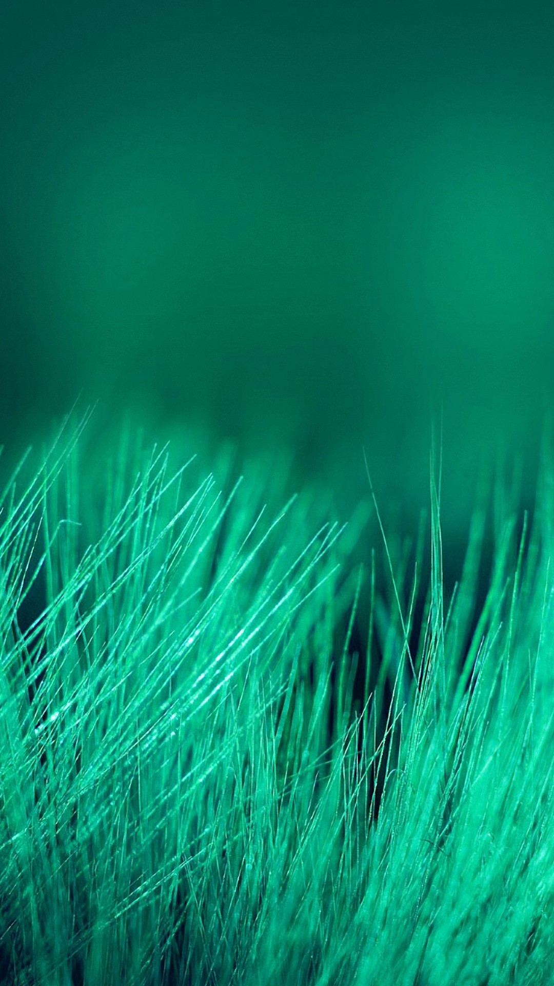 Light Green Fur Wallpaper