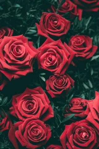 Girona Red Flowers