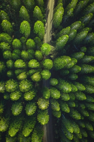 Trees Drone view